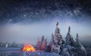 Обои лес, звезды, небо, зима, снег, ночь, палатка