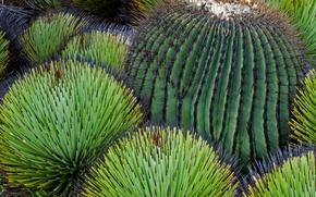 Картинка пустыня, кактус, Мексика, Чиуауа