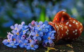 Картинка цветы, голубой, букет, ваза