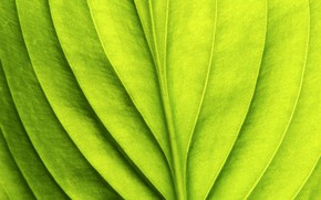 Обои green, leaf, pattern