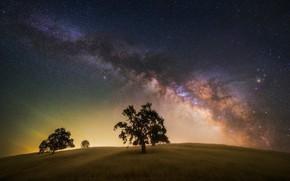 Картинка поле, небо, звезды, деревья, ночь, дерево, млечный путь