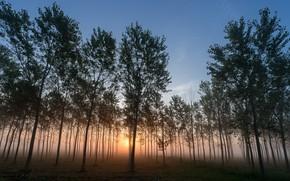Картинка деревья, закат, природа, туман
