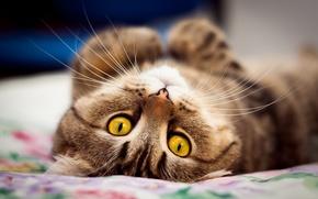 Картинка кот, глаза, мордочка, милый