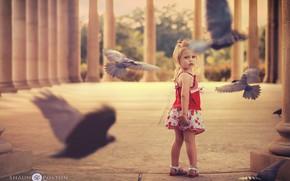 Обои девочка, птицы, улица