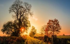 Обои природа, свет, дорога