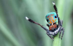 Картинка глаза, макро, яркий, природа, поза, зеленый, фон, узор, пауки, танец, лапки, паук, стебель, окрас, красивый, ...