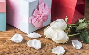 Картинка цветок, любовь, праздник, подарок, роза, лепестки, бант, коробочка