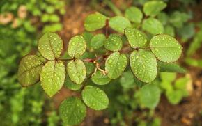 Картинка лес, трава, листья, вода, свежесть, природа, роса, дождь, зеленые листья, тишина, после дождя, календарь, капли ...