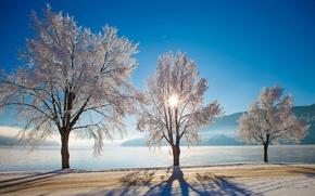 Картинка зима, дорога, деревья, озеро, Норвегия, Norway, Нутодден, Heddalsvatnet Lake, Notodden