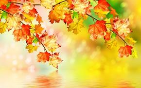 Обои листья, осень, вода, клен