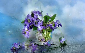Картинка стекло, цветы, фон, дождь, капли на стекле, фиалки в вазе