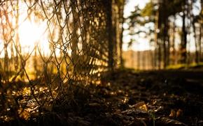 Картинка трава, солнце, макро, сетка, рабица