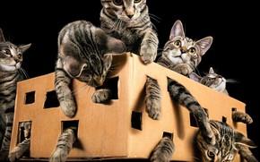 Картинка кошки, коробка, коты, лапы