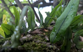 Картинка green, white, black, nature, water, brown, park, tree, leaf, moss, Trunk, veins, sprout