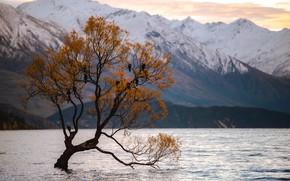 Картинка Природа, Дерево, Озеро, Птицы, Пейзаж