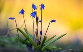 Картинка цветы, краски, весна