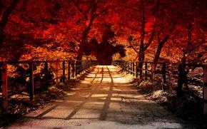 Картинка дорога, деревья, забор