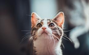 Картинка кошка, кот, усы, котенок, шерсть