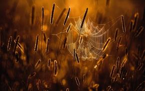 Обои паутина, свет, трава, макро, боке