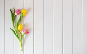 Картинка цветы, весна, желтые, тюльпаны, розовые, fresh, yellow, wood, pink, flowers, tulips, spring, tender