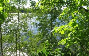 Картинка лето, парк, река