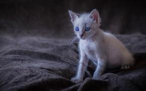 Картинка малыш, котёнок, голубые глаза