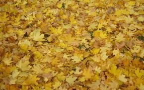 Обои листья, осень, парк