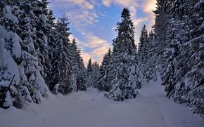 Картинка Закат, Зима, Деревья, Лес, Норвегия, Мороз, Сумерки, Winter, Frost, Sunset, Snow, Evening, Norway, Forest, Trees, …