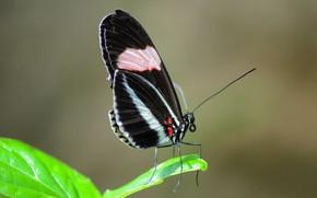 Картинка природа, лист, бабочка, крылья
