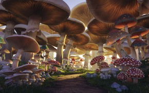 Картинка грибы, тропа, Mushroom Forest