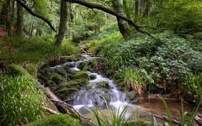 Картинка Зелень, Трава, Лес, Ручей