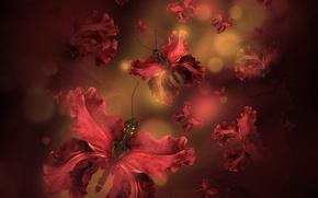Картинка бабочки, лепестки, water, butterflies, floral