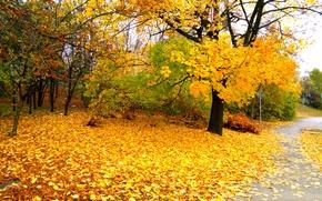 Картинка Осень, Польша, Варшава, Fall, Листва, Дорожка, Autumn, Colors, Poland, Warszawa, Листопад, Leaves, Path, Warsaw