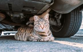 Обои кот, взгляд, укрытие