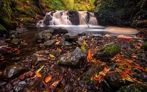 Картинка осень, лес, листья, водопад, поток