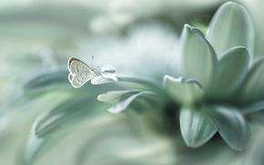 Обои цветок, бабочка, капля, лепестки, боке