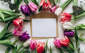 Картинка цветы, colorful, тюльпаны, розовые, white, белые, fresh, wood, pink, flowers, beautiful, tulips, spring, purple, tender
