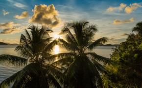 Картинка пейзаж, тропики, пальмы, вечер