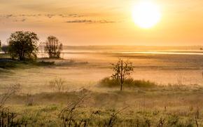 Обои природа, поле, утро, туман
