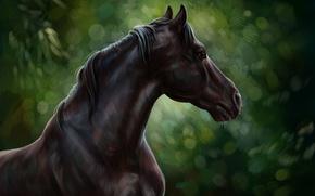 Обои лошадь, масло, арт, акварель, карандаш, живопись, horse, лошадка, гуашь, wallpaper., картина painting, лес природа, черный ...