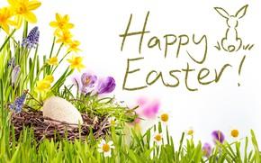 Картинка цветы, Happy, spring, flowers, eggs, decoration, трава, Пасха, нарциссы, Easter, солнце, небо, корзина, весна