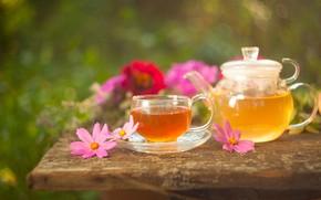 Картинка цветы, чай, чайник, напиток, космея