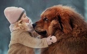 Обои друзья, пёс, Тибетский мастиф, настроение, дружба, девочка, собака