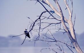 Картинка природа, дерево, птица
