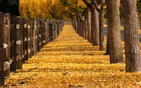 Обои город, осень, улица