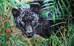 Картинка глаза, морда, природа, пантера