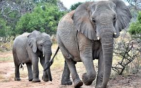 Картинка семья, слониха, слонёнок