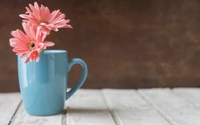 Обои цветы, деревянный стол, герберы, чашка, голубая чашка