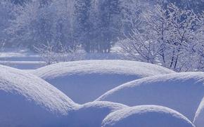 Картинка зима, лес, снег, деревья, сугробы, кусты