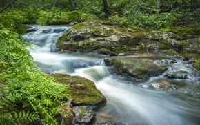 Картинка зелень, вода, камни, поток